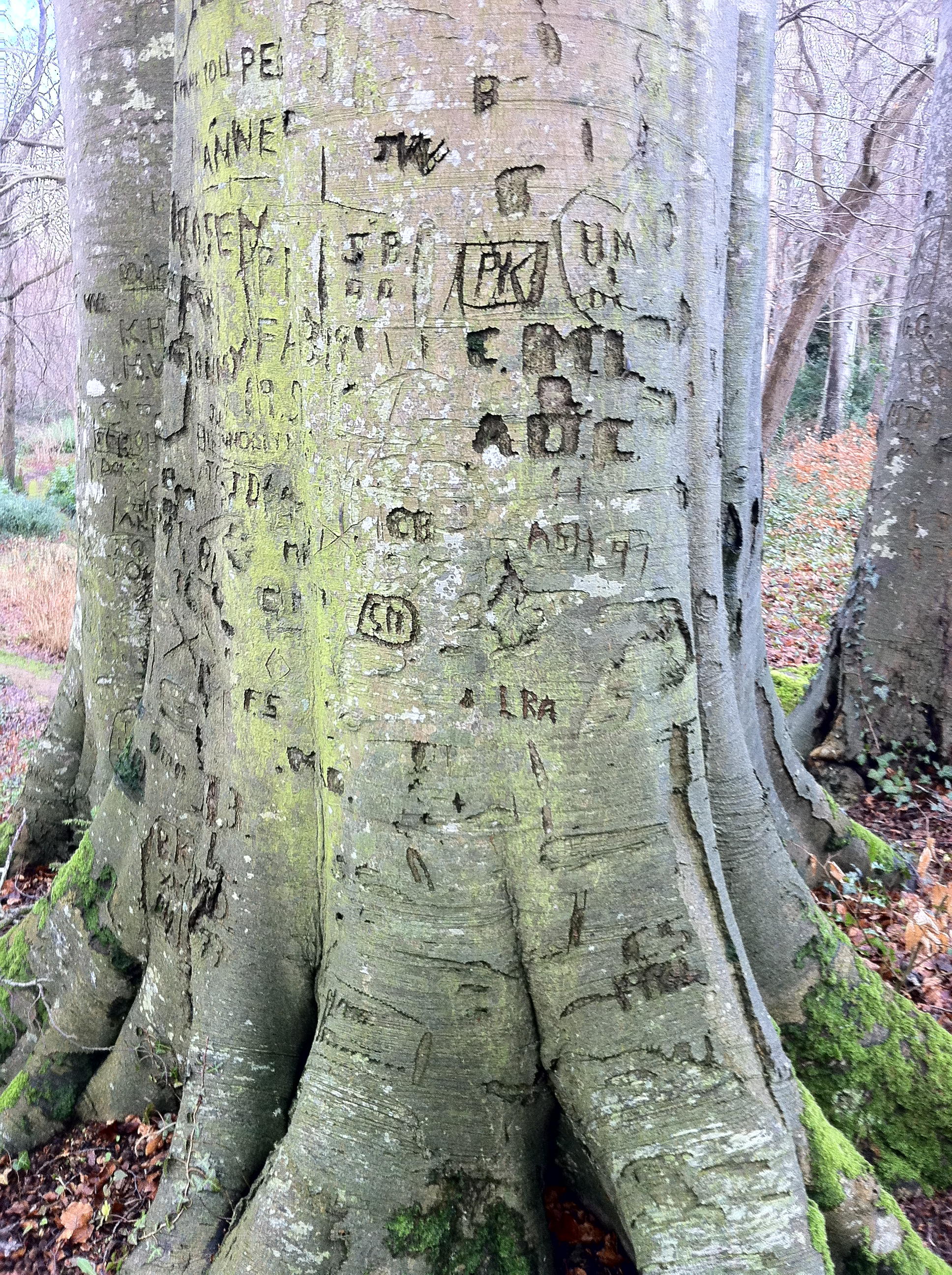 carve our names in a tree perhaps in our backyard one day