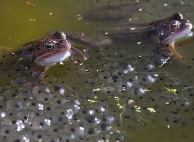 frog-spawn-390x285.jpg